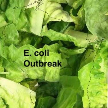 E. coli lawyer- Wisconsin romaine E. coli outbreak
